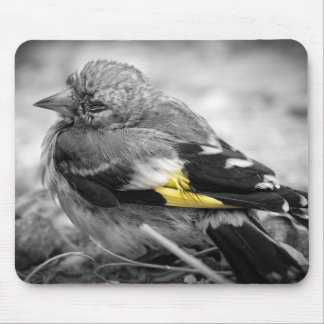 Lonely bird mouse pad