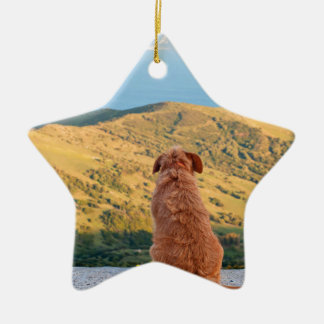 Lonely dog watching on Gibraltar strait Ceramic Star Ornament