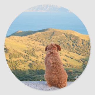 Lonely dog watching on Gibraltar strait Classic Round Sticker