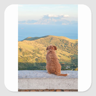 Lonely dog watching on Gibraltar strait Square Sticker
