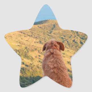 Lonely dog watching on Gibraltar strait Star Sticker