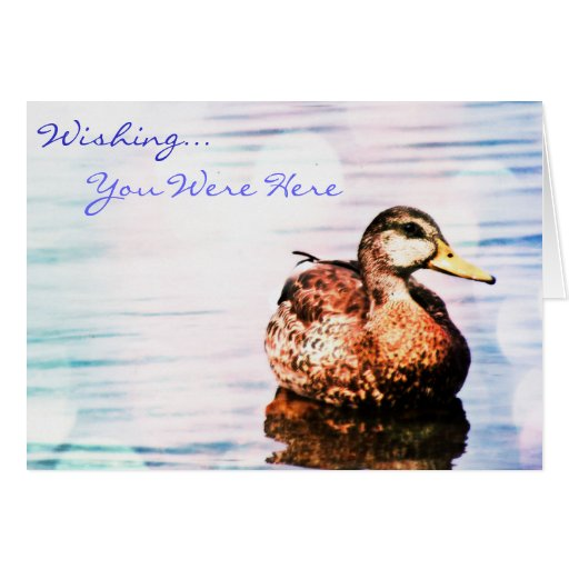 Lonely Duck Wishing You Were Here Greeting Card Greeting Cards