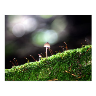 Lonely Fungus Postcard