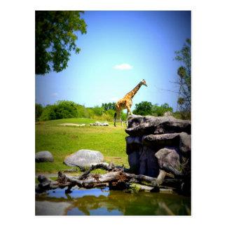 Lonely Giraffe Postcard