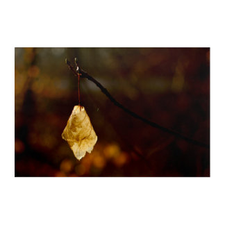 Lonely leaf lighted by the morning sun acrylic wall art
