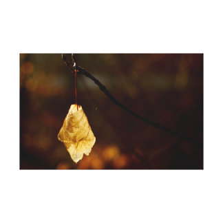 Lonely leaf lighted by the morning sun canvas print