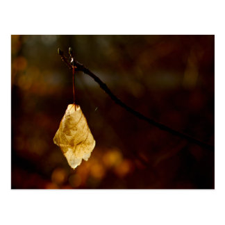 Lonely leaf lighted by the morning sun postcard