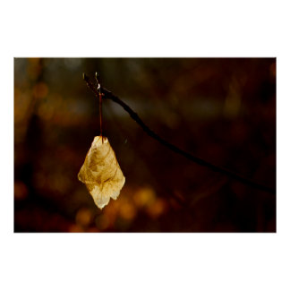 Lonely leaf lighted by the morning sun poster