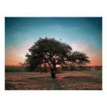 Lonely pear tree poster
