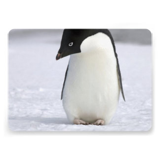 Lonely Penguin Personalized Invitation