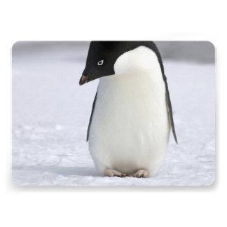 Lonely Penguin Invitations