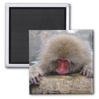 Lonely snow monkey in Nagano, Japan Magnet