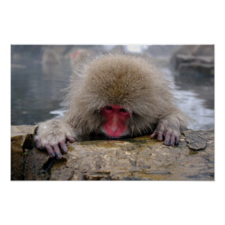 Lonely snow monkey in Nagano, Japan Poster