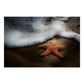 Lonely Starfish On The Beach Poster