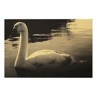 lonely Swan Black & White Wood Wall Art Wood Print