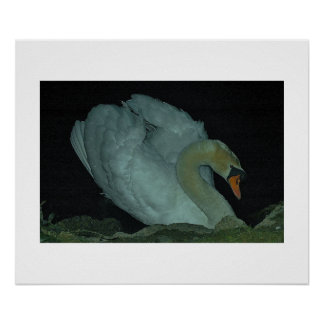 Lonely Swan Poster