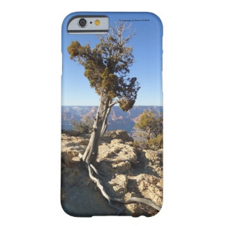 Lonely tree Cell Phone and Ipad cases