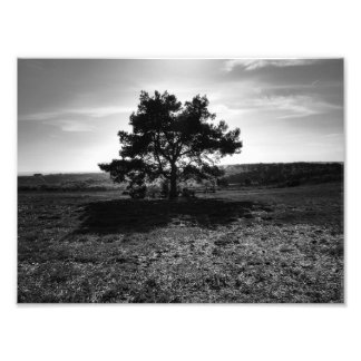 Lonely Tree Photo Print