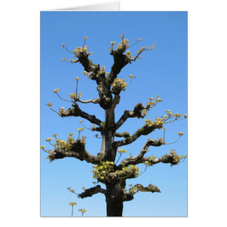 Lonely Tree - TBD series Card