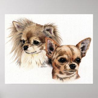 Long and smooth coat Chihuahuas Poster
