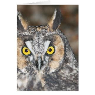 Long-eared Owl Card