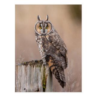 Long-eared owl on a stump postcard