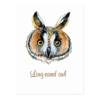Long- eared owl portrait postcard