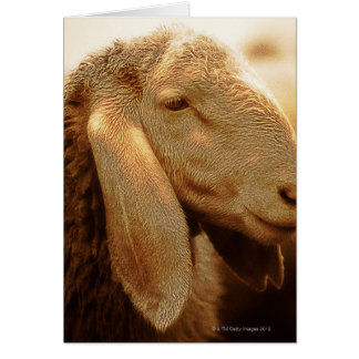 Long Eared Sheep Dolomites, Italy Greeting Cards