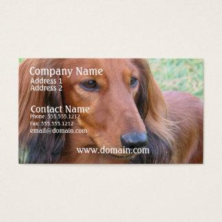 Long Hair Dachshund Business Card