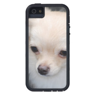 Long Haired Chihuahua iPhone 5 Cases