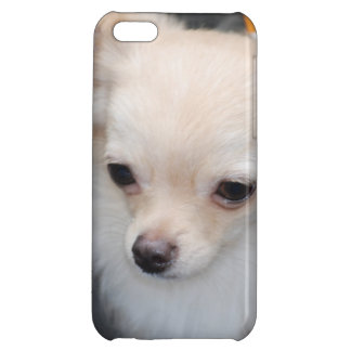 Long Haired Chihuahua iPhone 5C Cover