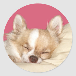 Long haired Chihuahua Round Sticker