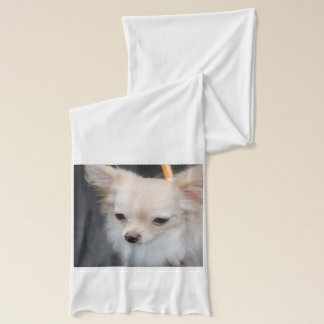 Long Haired Chihuahua Scarf