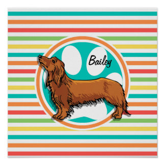 Long-haired Dachshund Bright Rainbow Stripes Poster