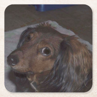 Long-Haired Dachshund Drink Coasters