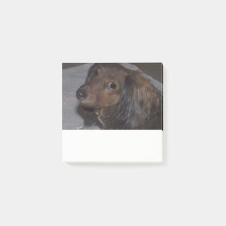 Long-Haired Dachshund Post it Notes