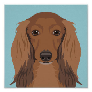 Long-Haired-Dachshund Poster