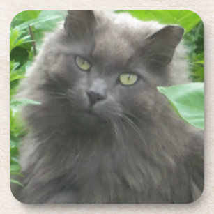 Long Haired Russian Blue Cat Kitchen Dining Supplies Zazzle Ca
