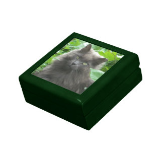 Long Haired Gray Russian Blue Cat Gift Boxes