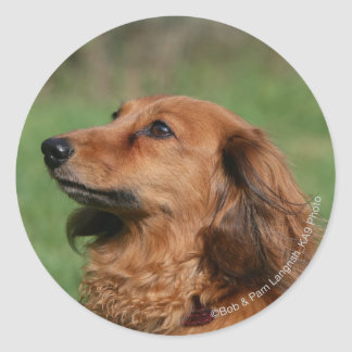 Long-haired Miniature Dachshund 2 Classic Round Sticker