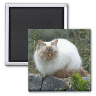 Long-haired Pedigree Cat Magnet