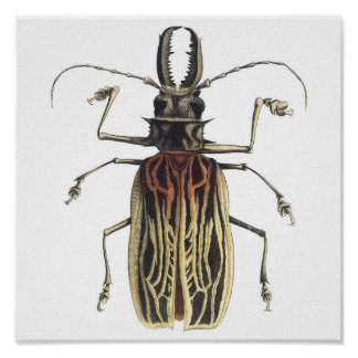 Long-Horned Beetle, Prionus Cervicornis Poster