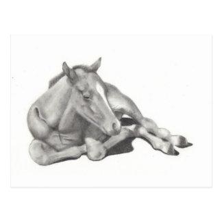 LONG-LEGGED FOAL: HORSE: PENCIL: REALISM POST CARDS