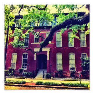 Long Limb In Savannah Photographic Print