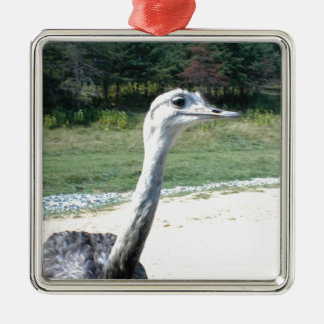 Long Neck Ostrich Profile Silver-Colored Square Ornament