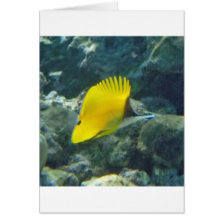 Long Nose Butterfly Fish Greeting Cards