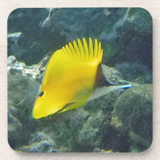 Long Nose Butterfly Fish Coaster