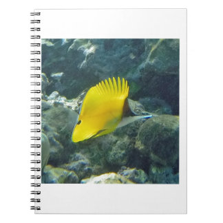 Long Nose Butterfly Fish Spiral Notebooks