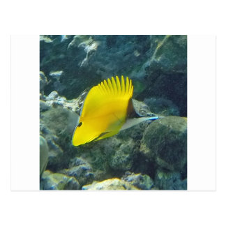 Long Nose Butterfly Fish Post Cards