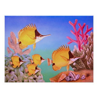 Long-nose Butterfly Fish Posters